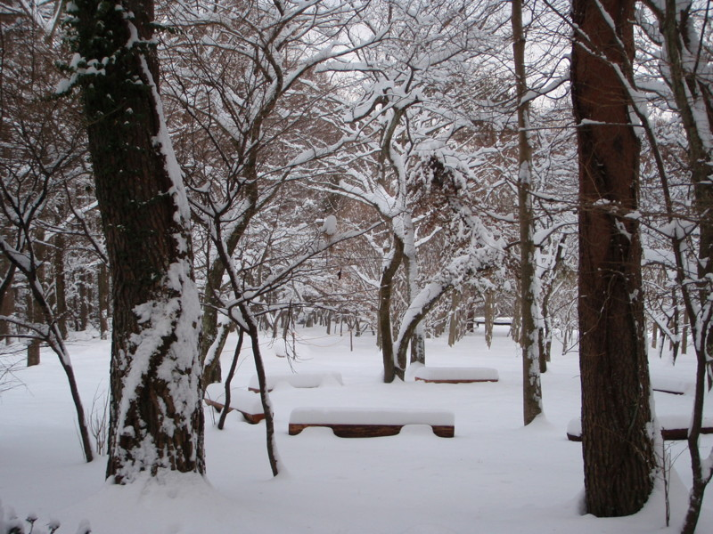 f:id:fujien:20120120160935j:image:w360