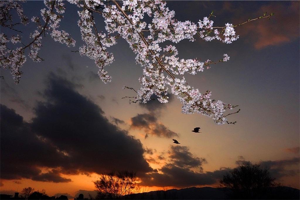 f:id:fujii419:20190318213904j:image