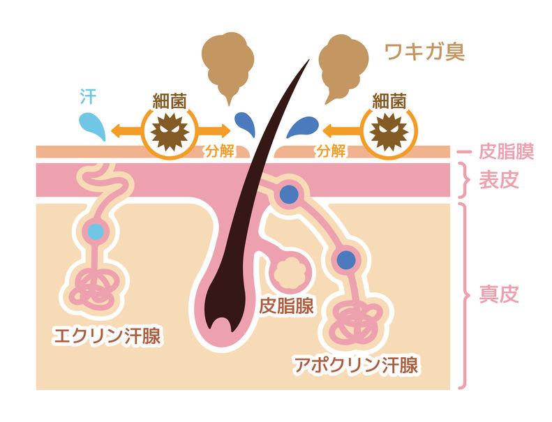 f:id:fujiikazuhisa:20200106175347j:plain