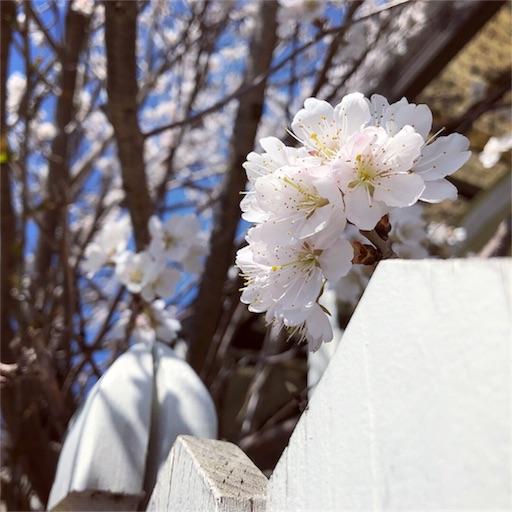 f:id:fujikana:20180318164901j:image