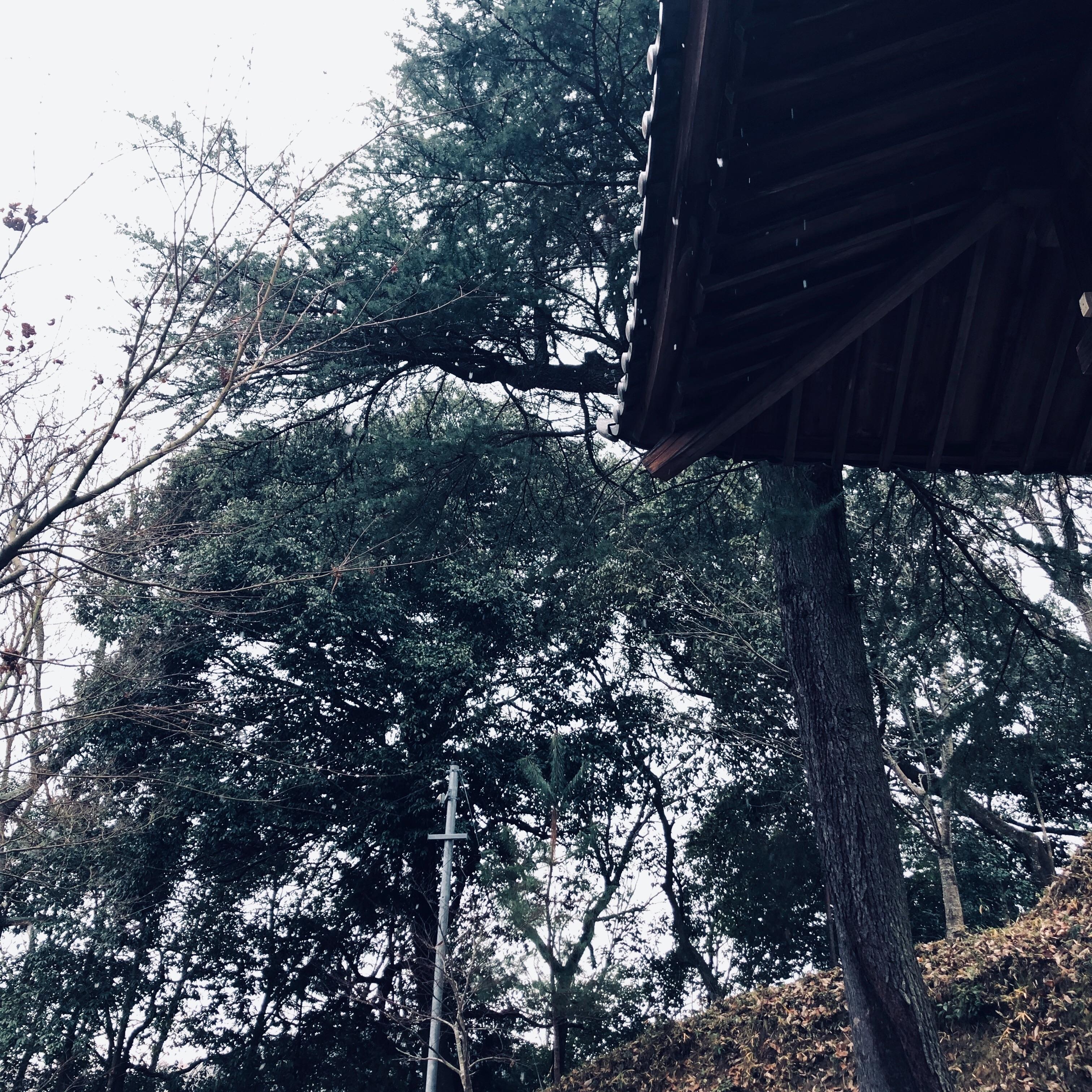 f:id:fujikana:20181229135747j:image