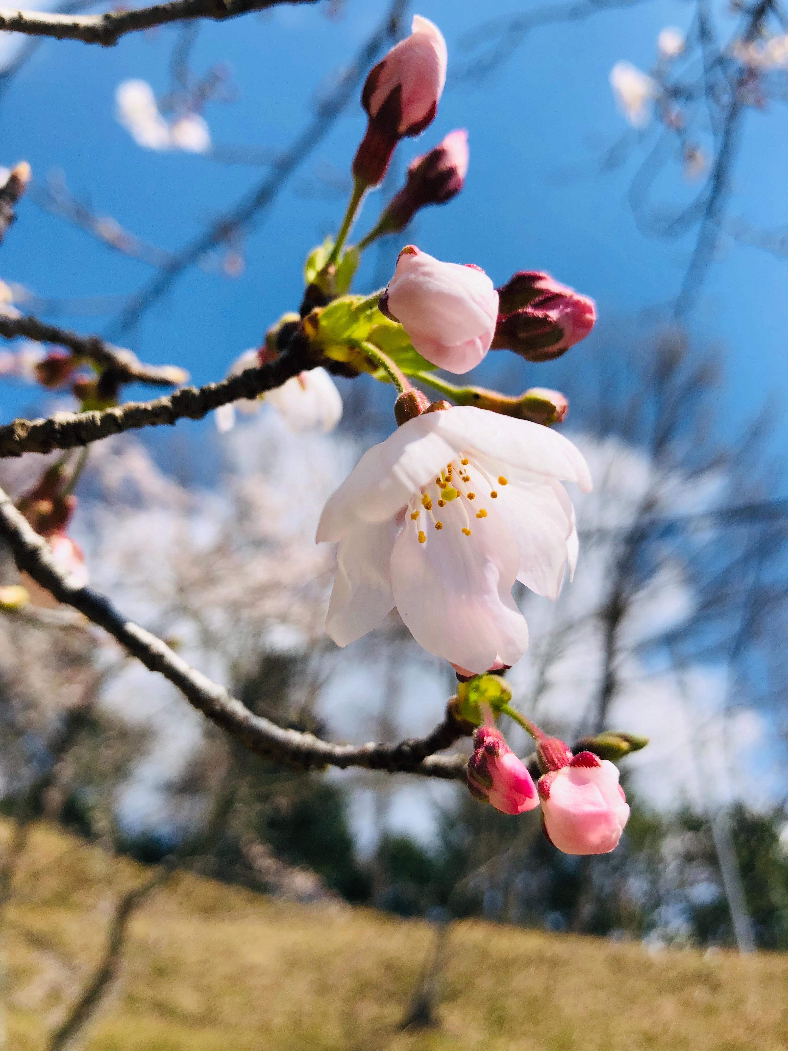 f:id:fujikana:20190401161729j:image