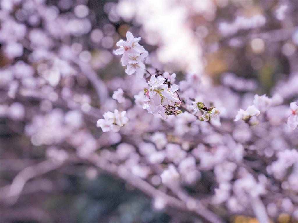 f:id:fujikixblog:20181217090537j:image