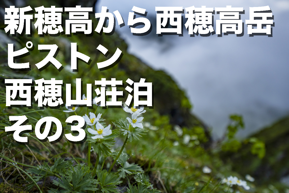 f:id:fujikixblog:20200102101019j:plain