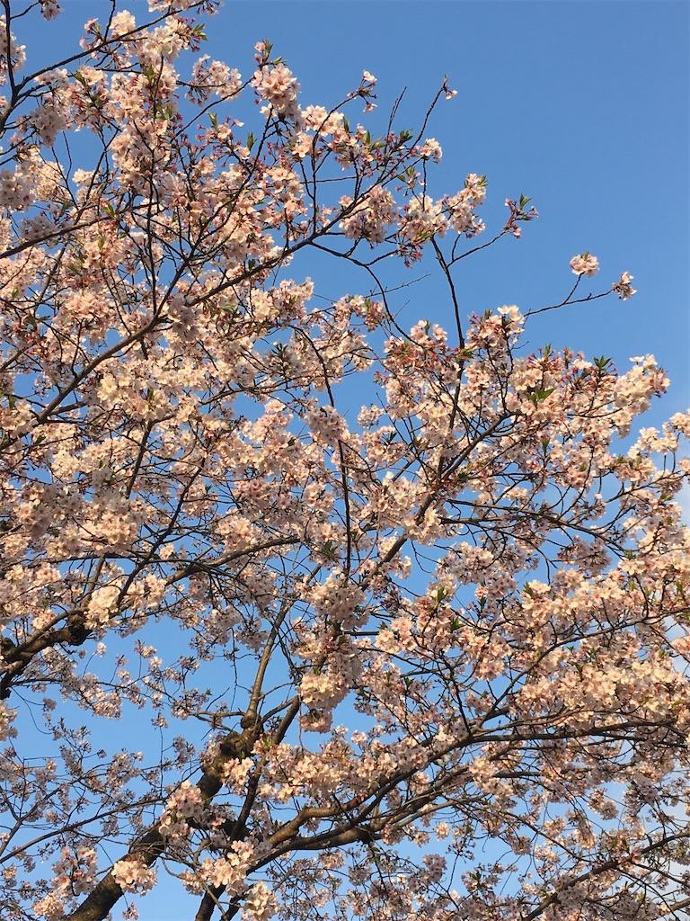 f:id:fujiko-chan:20200406222113j:image