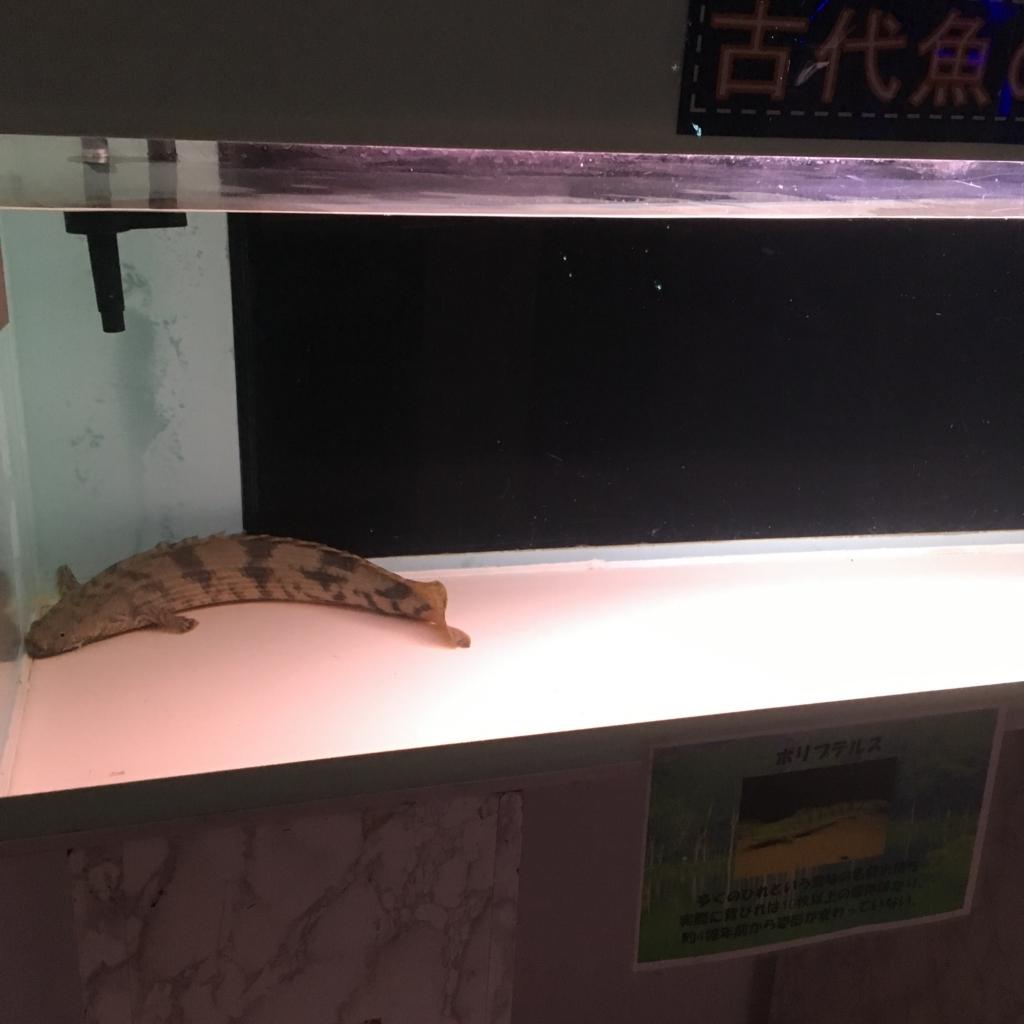 f:id:fujikomama:20180727130742j:plain