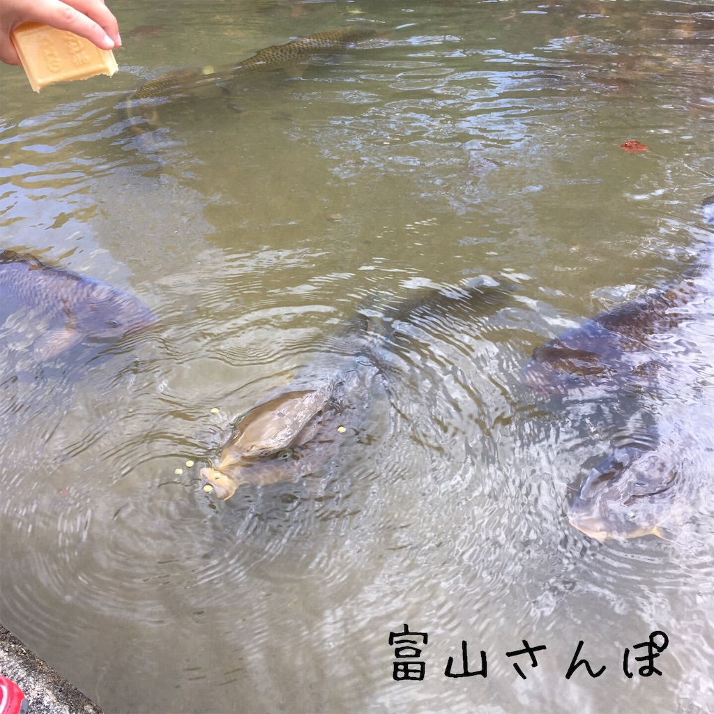 f:id:fujikomama:20181111122128j:image