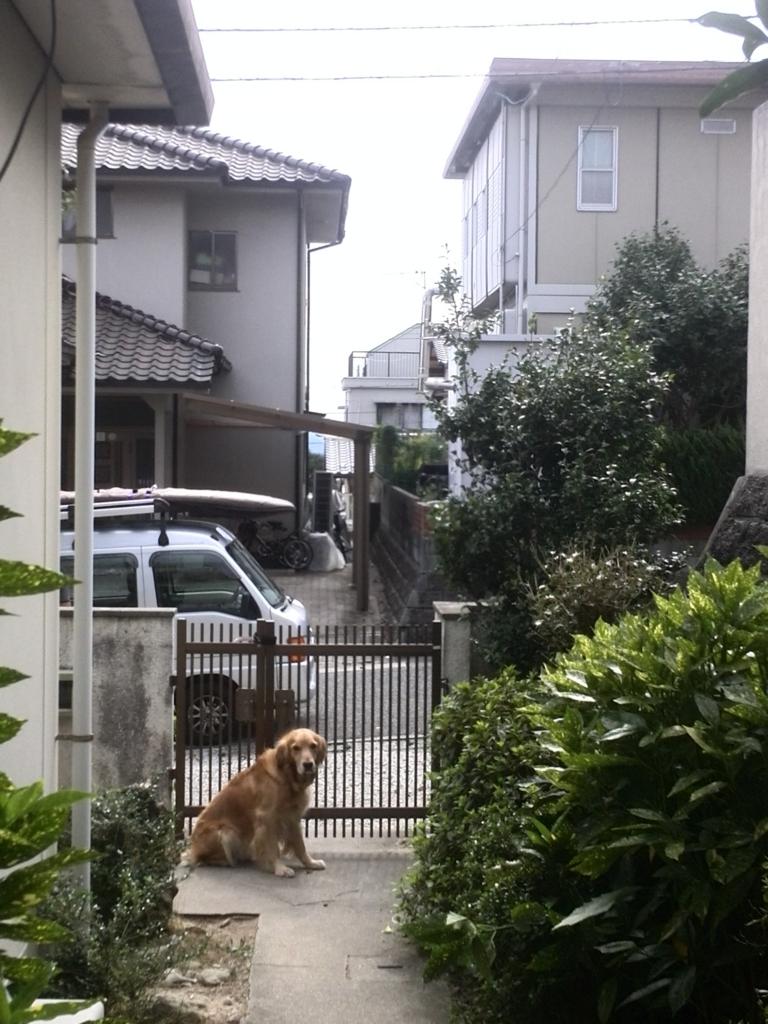 f:id:fujikumachan:20161013140606j:plain