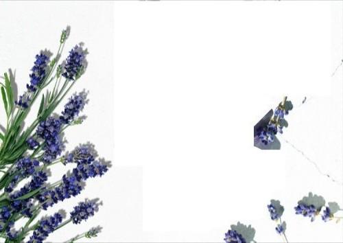 f:id:fujikup:20210723214913j:plain