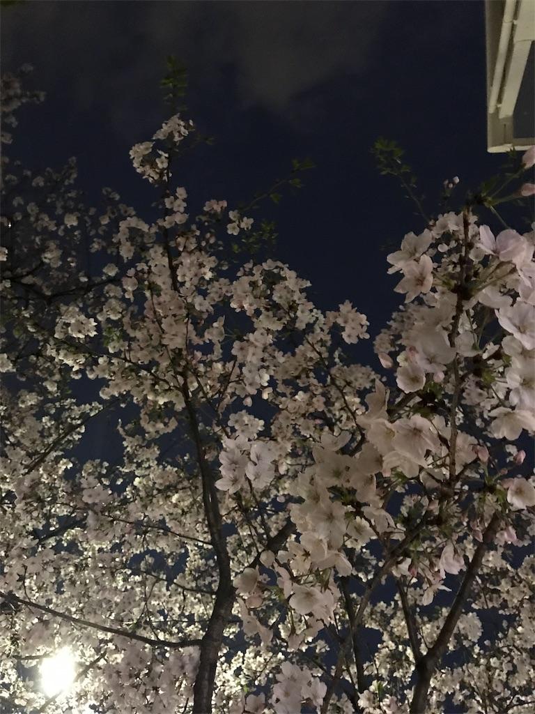 f:id:fujimineko0712:20190628082429j:image