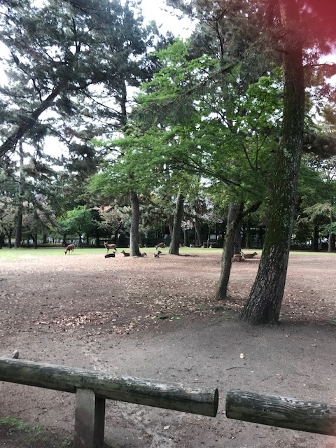 f:id:fujimokunetshop:20190513091331j:plain