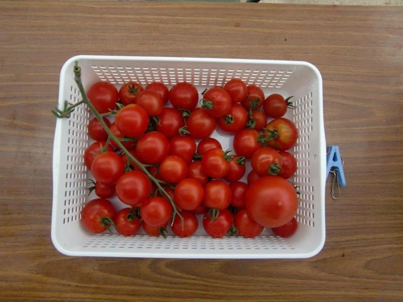f:id:fujino-kougyo:20120817135949j:image