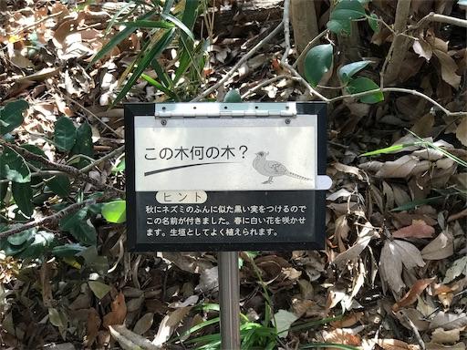 f:id:fujinosakura:20181022050018j:image