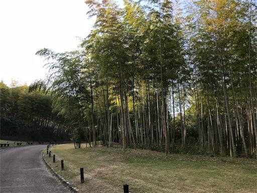 f:id:fujinosakura:20181023120306j:image