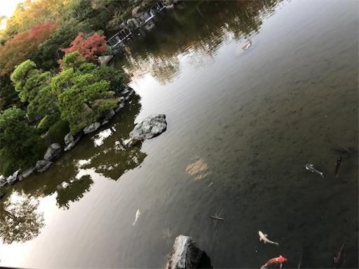 f:id:fujinosakura:20181023120312j:image