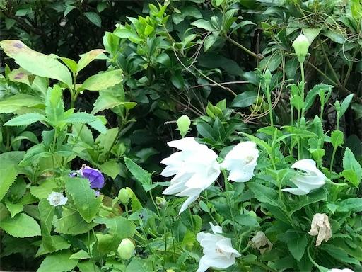 f:id:fujinosakura:20181028143108j:image