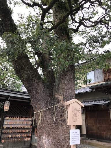 f:id:fujinosakura:20181028143122j:image