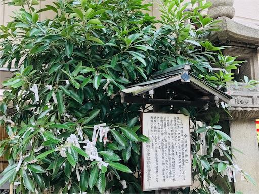 f:id:fujinosakura:20181102053908j:image