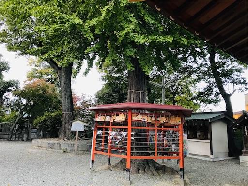 f:id:fujinosakura:20181111172533j:image