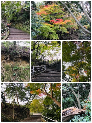 f:id:fujinosakura:20181116193916j:image