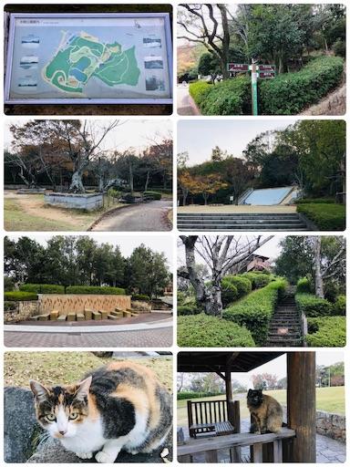 f:id:fujinosakura:20181116193924j:image