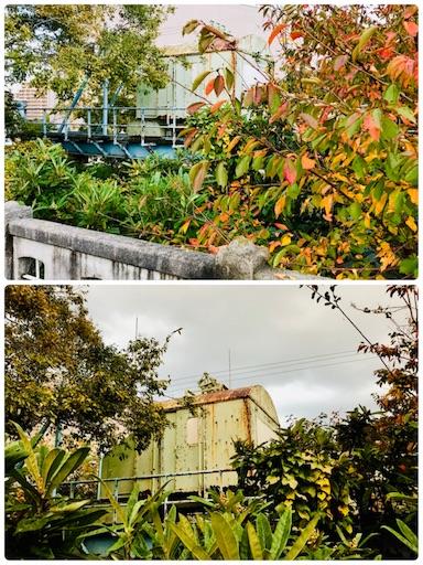 f:id:fujinosakura:20181118142108j:image