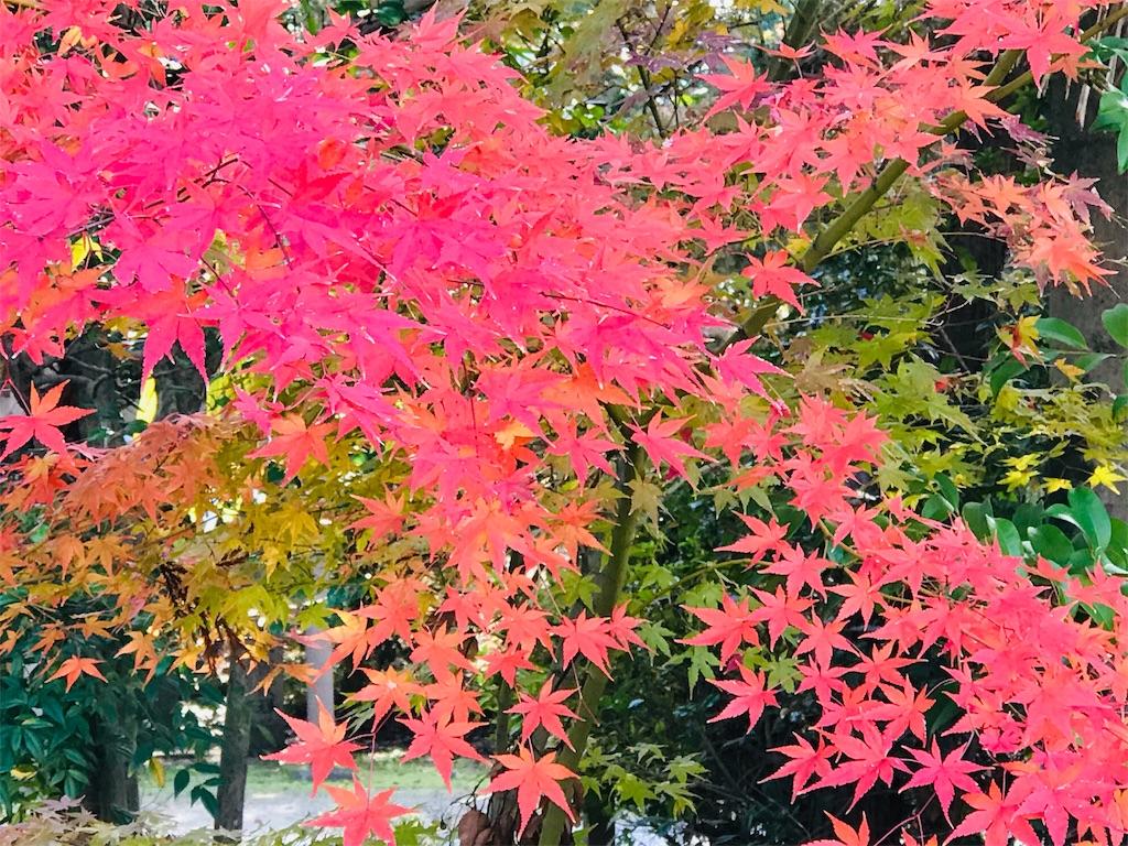 f:id:fujinosakura:20181129214837j:image