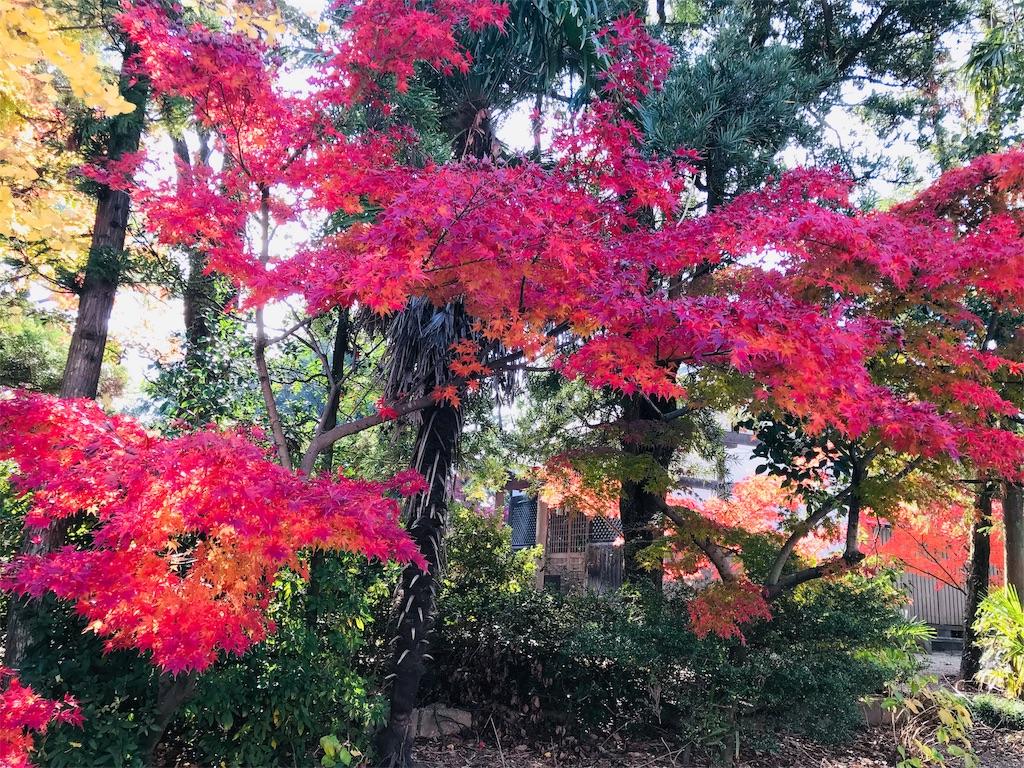 f:id:fujinosakura:20181129214939j:image