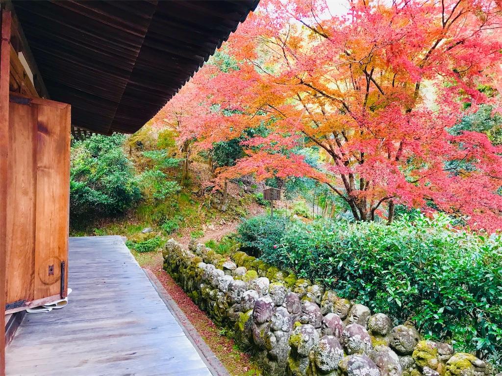 f:id:fujinosakura:20181202094332j:image