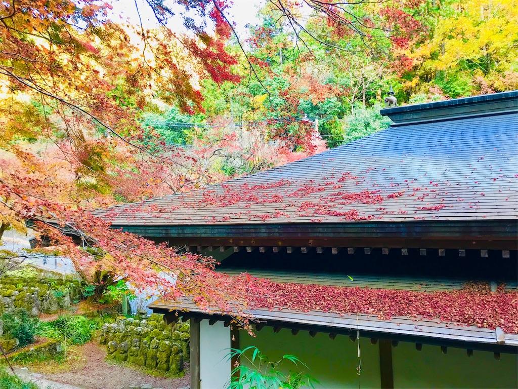 f:id:fujinosakura:20181202094400j:image