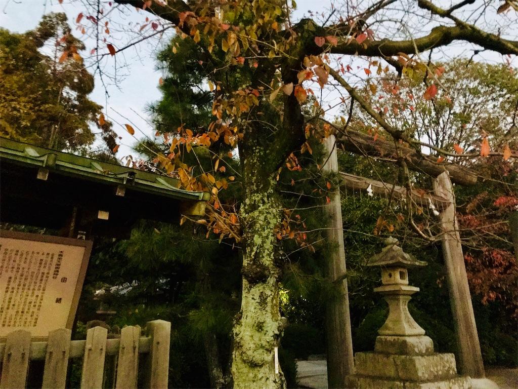 f:id:fujinosakura:20181203010010j:image
