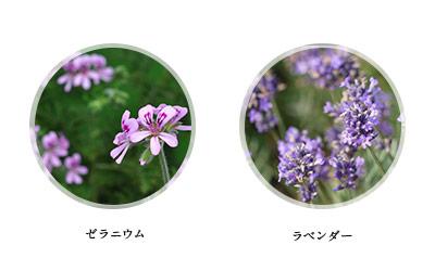 f:id:fujisan606:20180919110212j:plain
