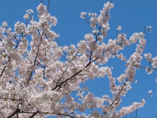 f:id:fujisawa-zuan:20120412171123j:image:w400