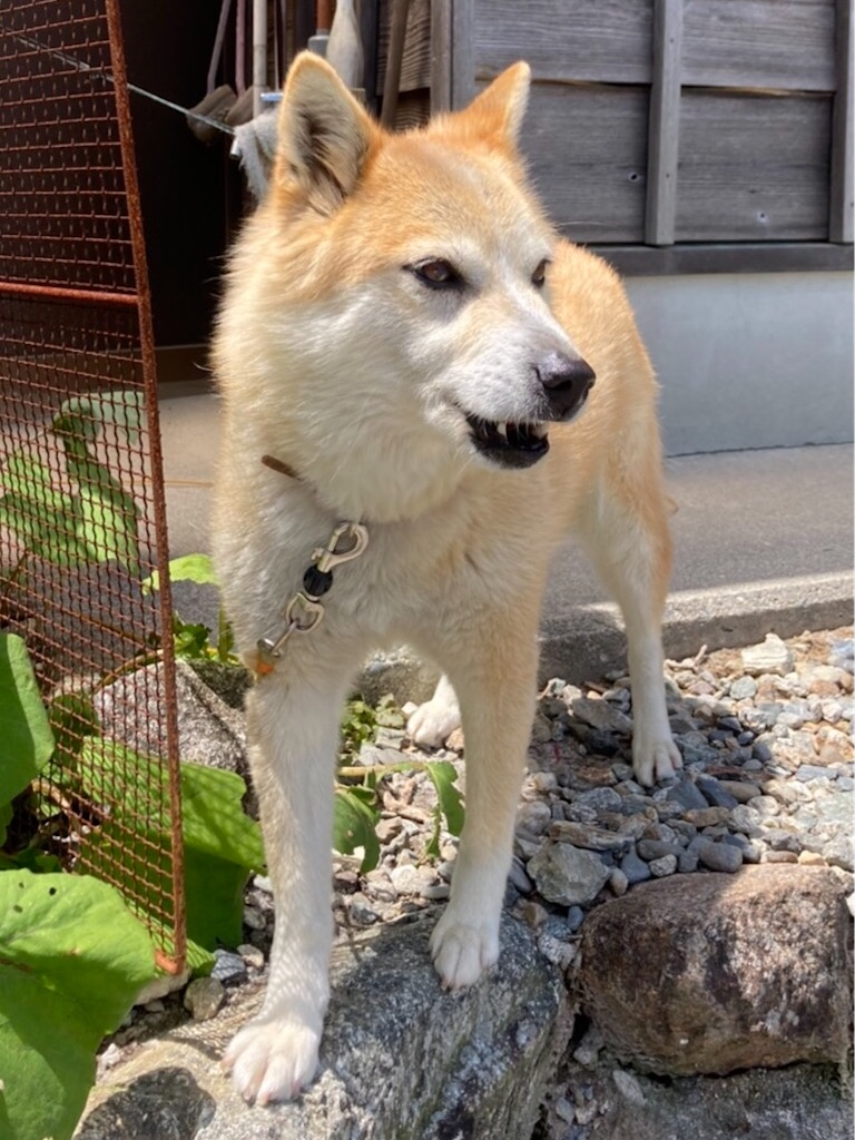 f:id:fujishika:20210506230023j:image
