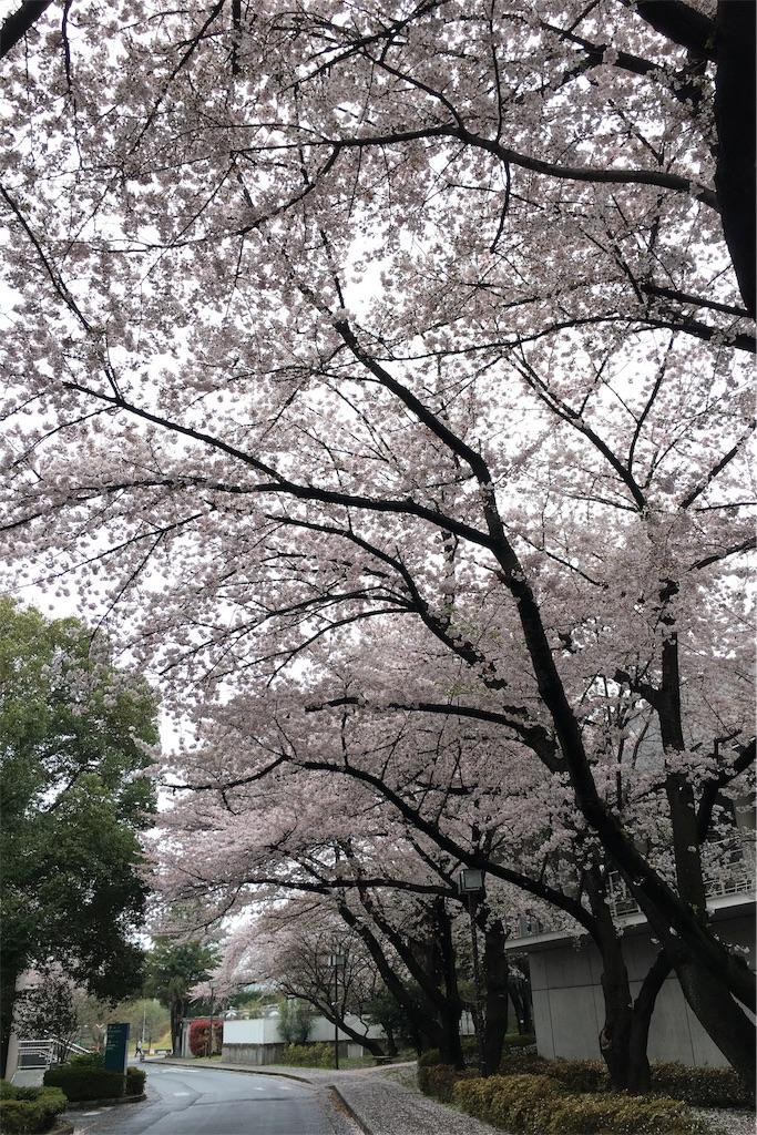 f:id:fujita244:20170408105411j:image