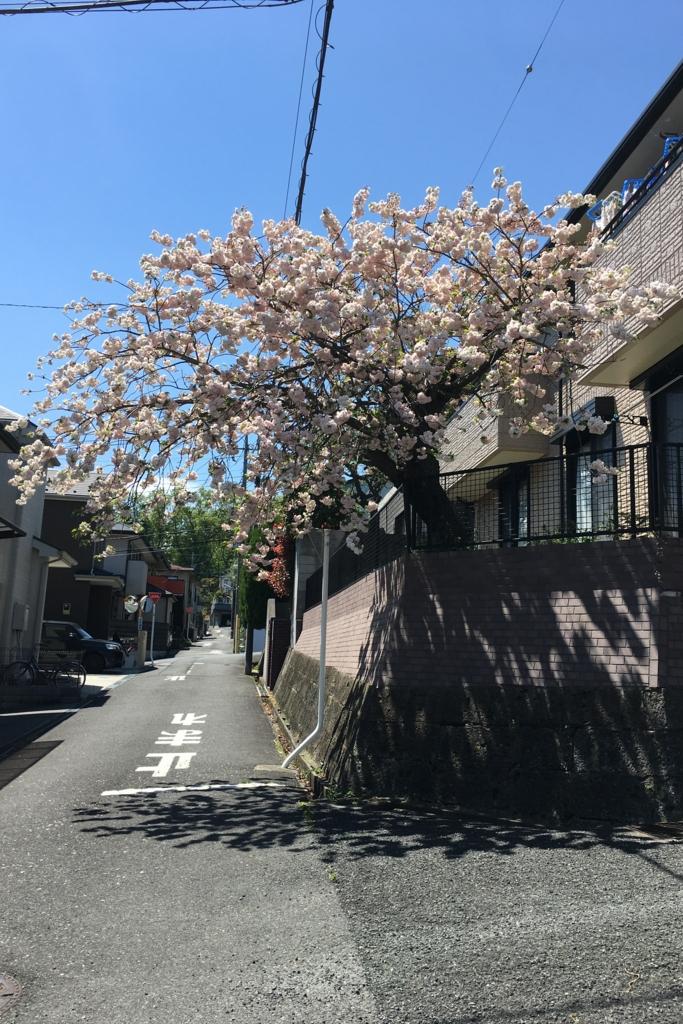 f:id:fujita244:20170423123609j:plain