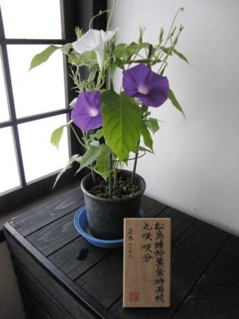 f:id:fujitam3:20110718085320j:image