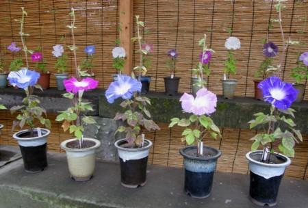 f:id:fujitam3:20110807142349j:image