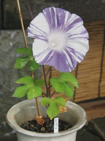 f:id:fujitam3:20110807142350j:image