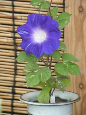 f:id:fujitam3:20110807142351j:image