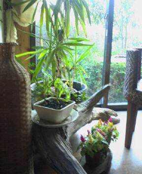 f:id:fujiwarakominka:20080113154200j:image