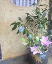 f:id:fujiwarakominka:20080120115300j:image:w100