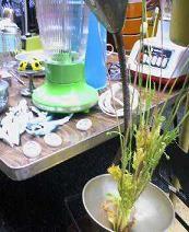 f:id:fujiwarakominka:20080525100600j:image