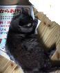 f:id:fujiwarakominka:20080806073700j:image