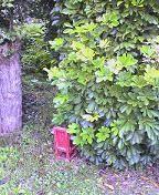 f:id:fujiwarakominka:20081108130800j:image