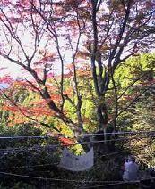 f:id:fujiwarakominka:20081122153300j:image