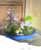 f:id:fujiwarakominka:20090202090400j:image