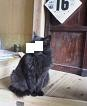 f:id:fujiwarakominka:20090216134000j:image
