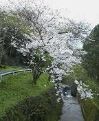 f:id:fujiwarakominka:20090323112000j:image