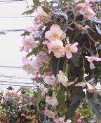 f:id:fujiwarakominka:20090421145100j:image